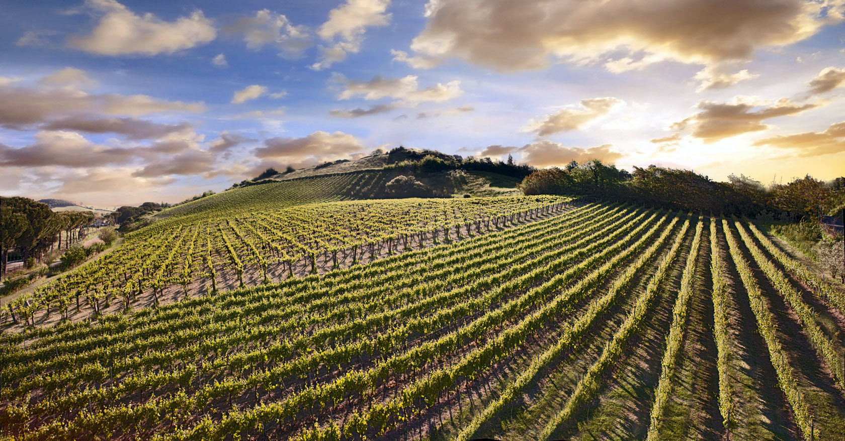 azienda vinicola Tarquinia